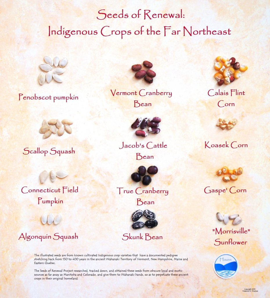 Seeds of Renewal: Indigenous Crops of the Northeast
