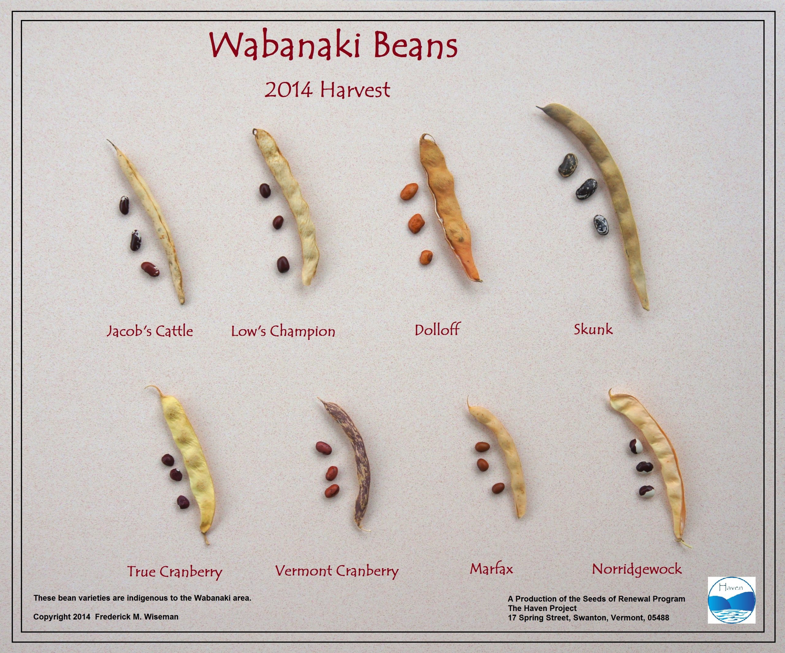 images of types of beans.