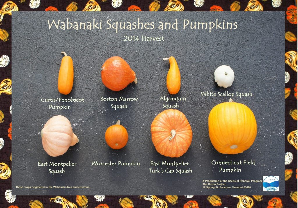 Wabanaki Squashes and Pumpkins: 2014 Harvest