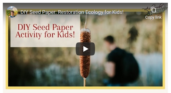 "This is a slide that respresents the video on YouTube. It has the image cattails and the title of the video ""DIY Seed Paper Activity for Kds!"""